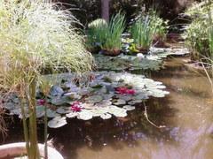 Jardin botanico en Valencia